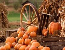 Hudson Valley Pumpkin Picking